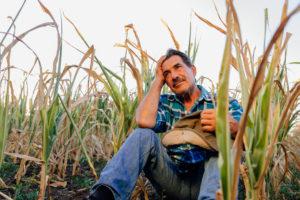 農家の防犯対策8選!畑やビニールハウスの野菜・果物を盗まれないようにするには?